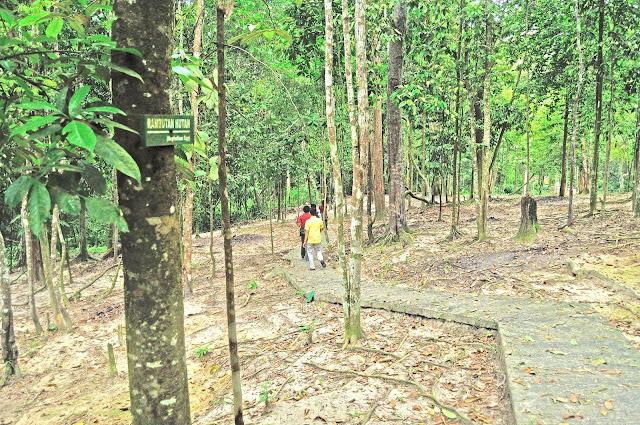 Hutan ini adalah hutan konservasi milik Departemen Kehutanan yang dikelola oleh Kantor BKSDA Kota Dumai. Hutan ini berada di tengah-tengah kota Dumai, persis di Bukit Jin kelurahan Bukit Timah, Kecamatan Dumai Barat.   Pemerintah Kota sedang membenahi sarana pendukung di sini. Taman serta fasilitas pendukung dibangun, termasuk jembatan penghubung,tempat istirahat, toilet dan taman serta areal parkir yang luas.  Saat anda berkunjung ke Hutan Wisata di dumai, anda akan terkejut melihat keunikan pohon – pohon yang besar dan rindang serta akar -akar yang berukuran panjang. Sejenak anda akan merasakan keteduhan dan kesejukkan alam kontras yang dengan temperatur Kota Dumai yang panas seperti daerah perkotaan diriau lainnya.   Selain banyak dikunjungi oleh para wisatawan untuk rekreasi atau menghilangkan rasa penat, Hutan wisata dapat digunakan tempat penelitian pencinta lingkungan, seperti pelajar. Hutan wisata ini memiliki beraneka ragam tumbuhan seperti hutan meranti, kempas,rengas, pulai, kulim dan lainnya.   Jika beruntung saat berwisata hutan wisata dumai ini,  anda akan melihat aneka binatang yang membuat suasana sangat alami, adapun binatang kita lihat saat berkunjung kera, tupai, biawak, landak dan berbagai jenis burung sehingga membuat anda lebih tenang dan nyaman saat menikmati Hutan Wisata Dumai.