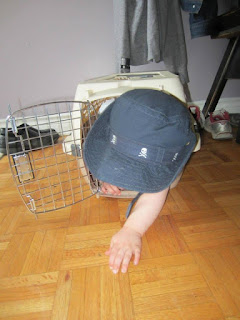 toddler in cat carrier