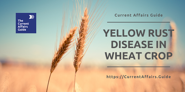 Yellow Rust - The disease in Wheat Crop that swept Punjab and Haryana