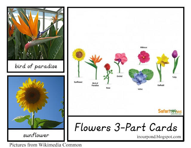 FREE 3-Part Cards for Safari Ltd Flower Toob