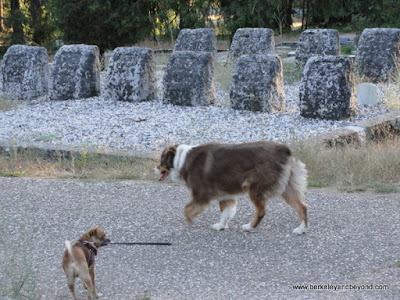 dogs amid the graves at Pine Grove Cemetery in Nevada City, California