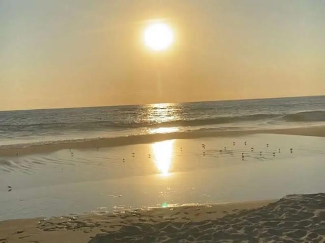 Atardecer en la playa con aves caminando sobre la arena