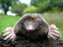 inside 107 and 109: Moles are coming!