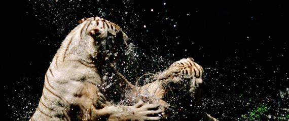 Αν τα ζώα αποκτούσαν ξαφνικά την ανθρώπινη ευφυία...