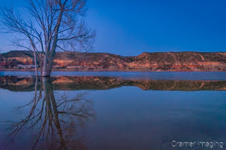 Cramer Imaging's fine art landscape photograph of a tree reflecting in the water of Wide Hollow Reservoir Escalante Utah at twilight