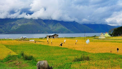 Wow ! Kabupaten Toba Surplus Beras