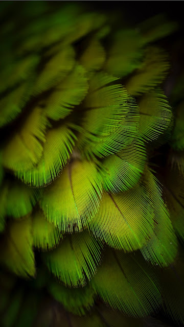 Iphone wallpaper for green parrot feather