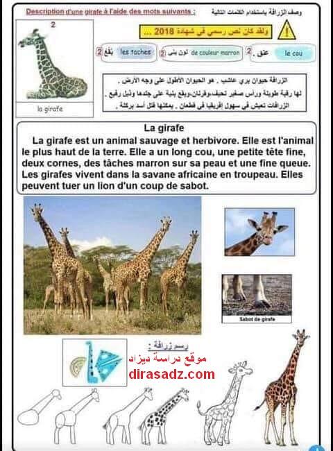 تعبير عن الزرافة باللغة الفرنسية 5 ابتدائي