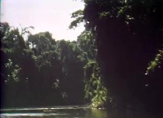 Yanomamo