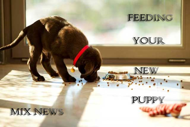Feeding Your New Puppy