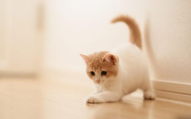 خلفيات قطط