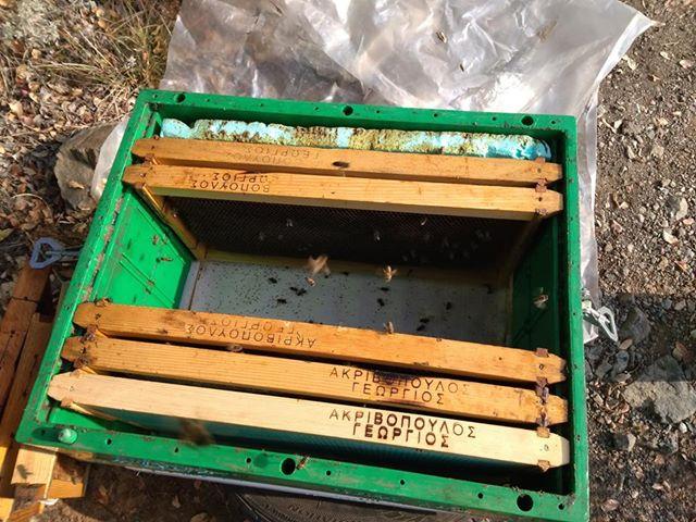 Κηρόπανο η πλαστικός τροφοδότης; Αποθήκευση με μέλια κουμαριάς και αεριζόμενος πάτος το Χειμώνα...