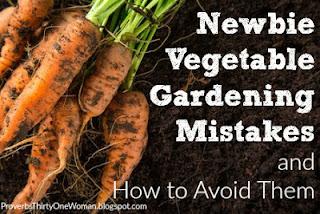 https://proverbsthirtyonewoman.blogspot.com/2016/05/newbie-vegetable-gardening-mistakes-and.html