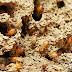 تخلص من النمل الابيض