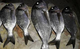 سمك الدنس وطرق صيدة المختلفة