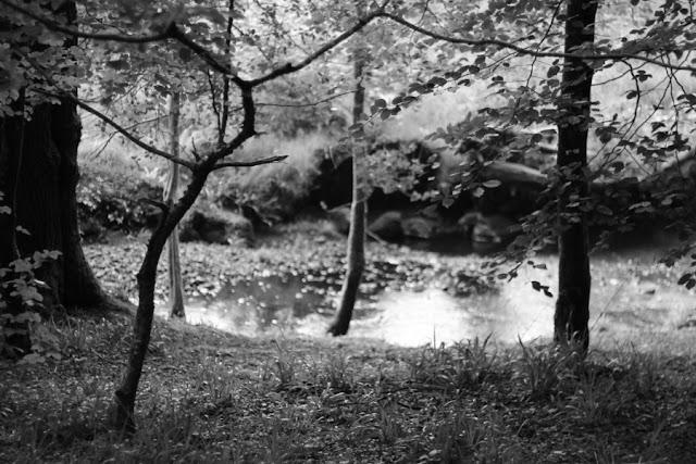 Slishwood Trees