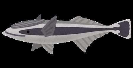 コバンザメのイラスト