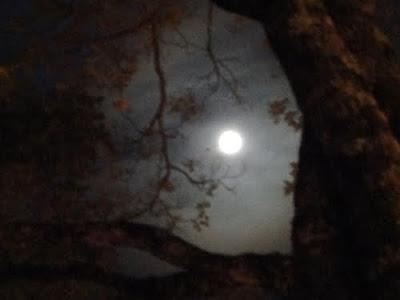 Resultado de imagem para imagens olhando a lua e as estrelas
