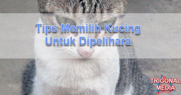 Tips Memilih Kucing Untuk Dipelihara
