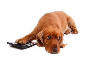 Hund berechnet Bedarfswerte