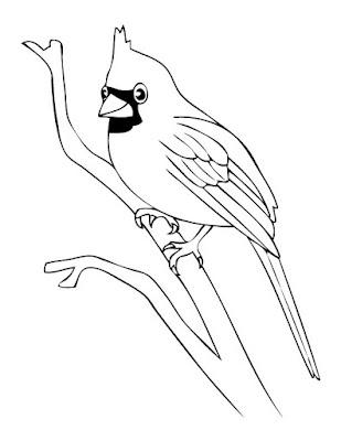 Sketsa Gambar Burung Hantu,Merak,Garuda,Elang