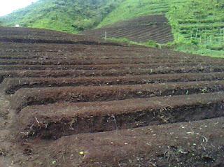 Cara menyiapkan lahan untuk menanam jagung