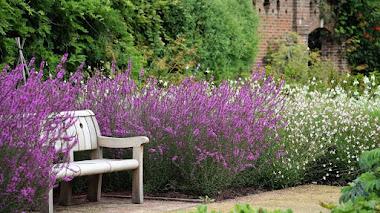 Agius Evolution Garden, un jardín que celebra 350 millones de años de adaptación vegetal