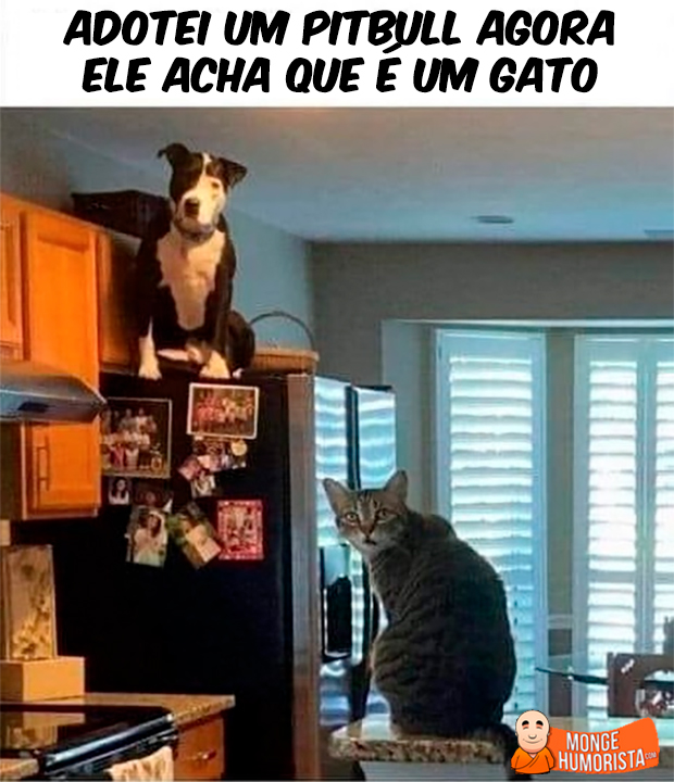 Cat Café - Página 4 15.1.Pitbullgato