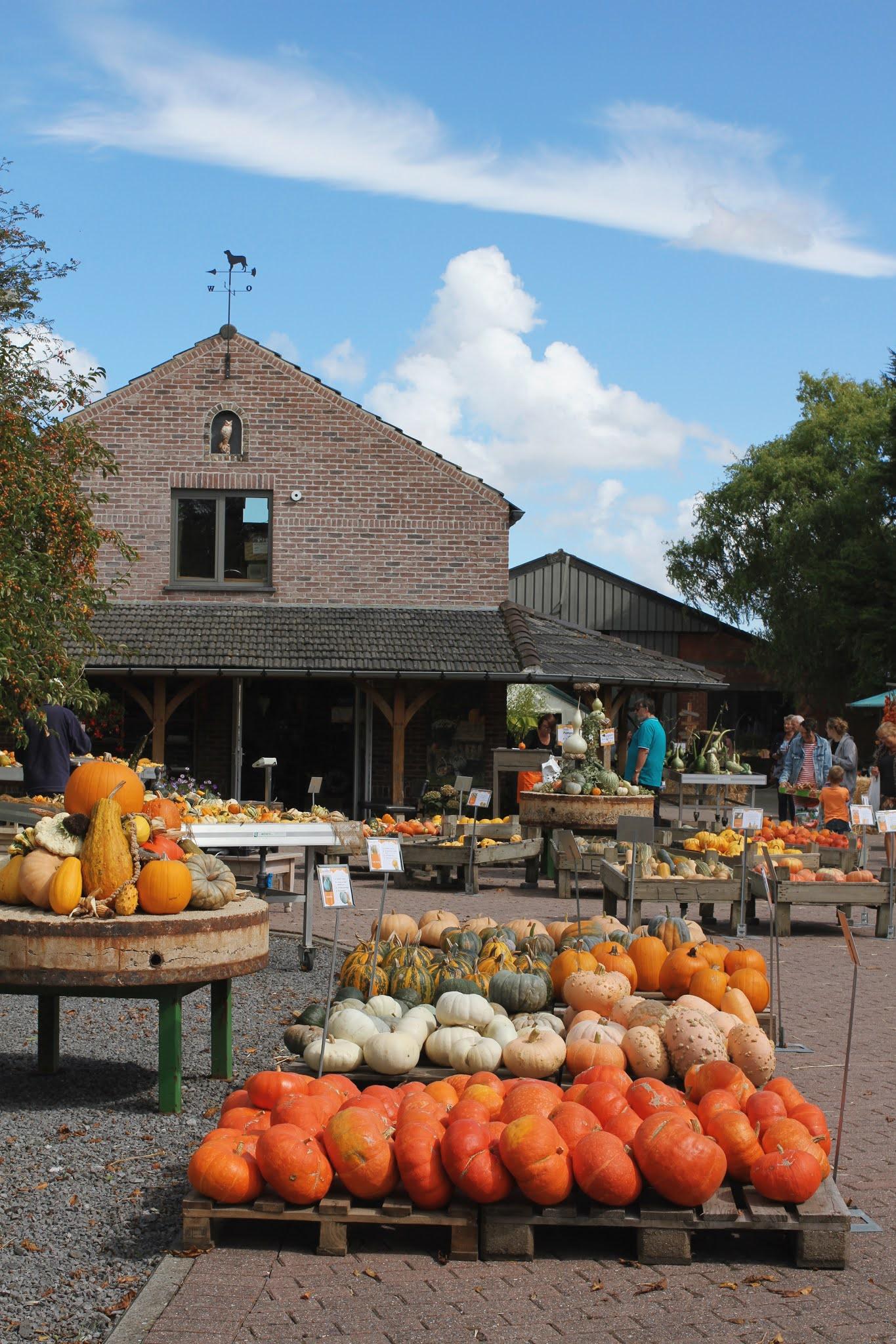 A visit to Charlottes Pompoenen pumpkin farm
