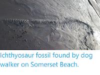 https://sciencythoughts.blogspot.com/2019/12/ichthyosaur-fossil-found-by-dog-walker.html