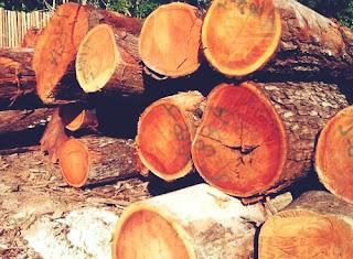 mahogany woods