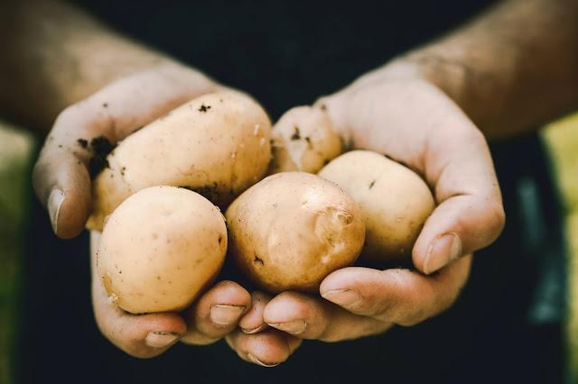Ganze Kartoffeln verwerten: Tipps und Rezept-Ideen