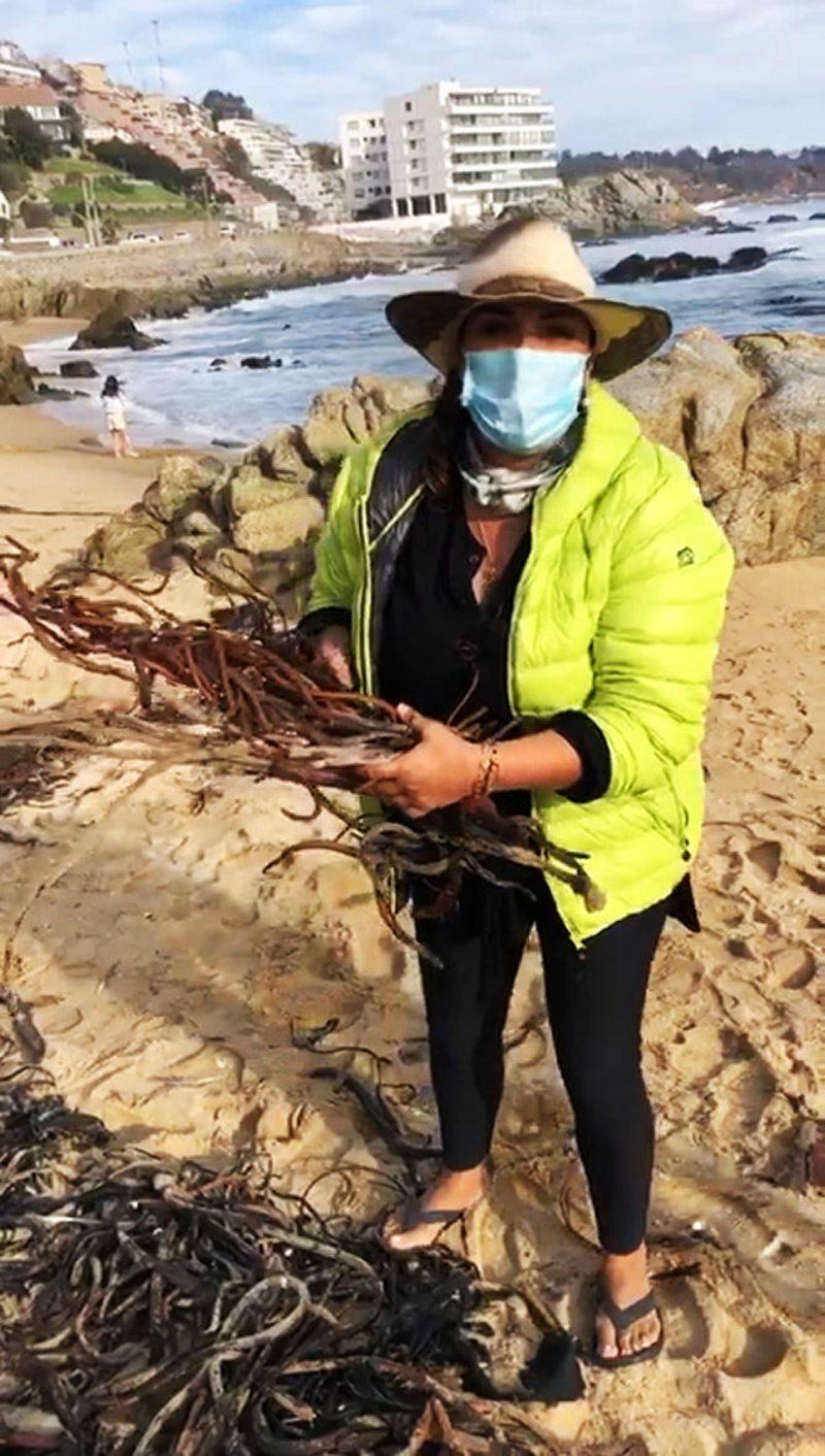 Marlen Olivari va a las playas de Viña del Mar a cosechar cochayuyo