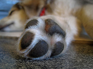 patas de cães