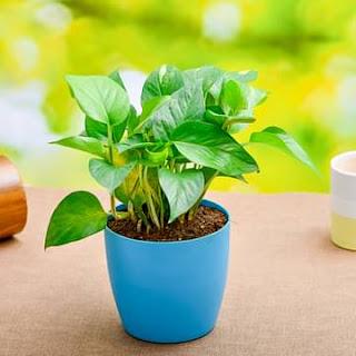 Nurserylive- Buy Plants Of ₹200 For Free