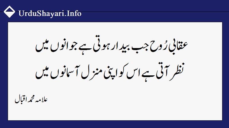 allama iqbal poetry in urdu for youth - عقاب شاعری اقبال