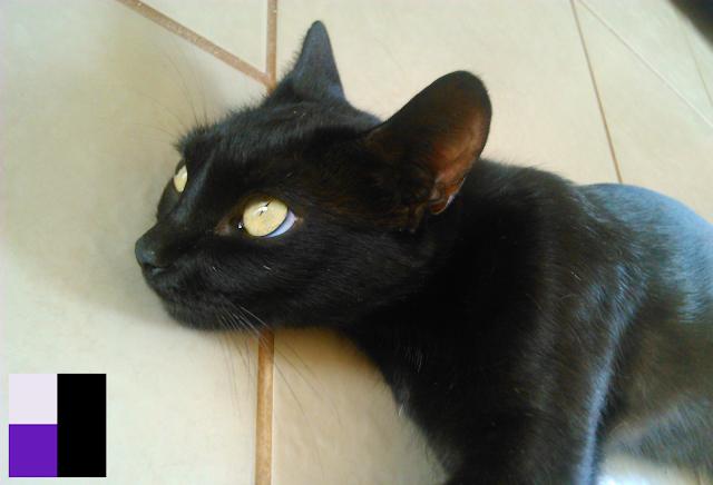 Rukia 4 (Placcido)