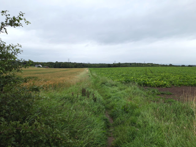 A footpath which goes between two fields.  On the left is a field of golden wheat and on the right is a field of green leaves.  The sky is grey