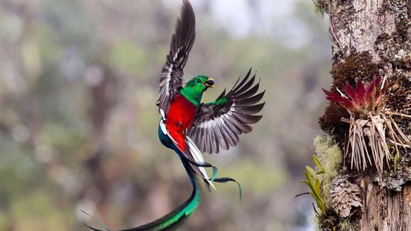 Vahşi Yaşam Fotoğrafları - 13
