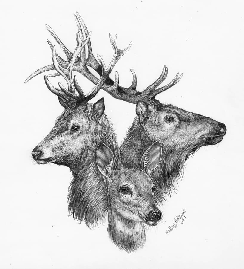 11-Deer-family-portrait-Ashley-Habernal-www-designstack-co