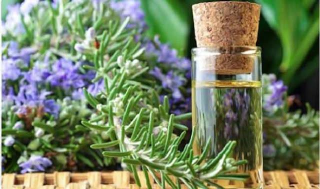 Hương thảo và những công dụng hữu đối với sức khỏe