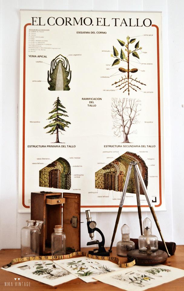 Decorar con objetos antiguos de laboratorio y botánica también son una buena opción para dar personalidad a nuestra casa