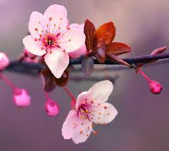 30 Puisi Tentang Bunga Singkat Mawar Matahari Tulip Melati Klak Klik Bermutu