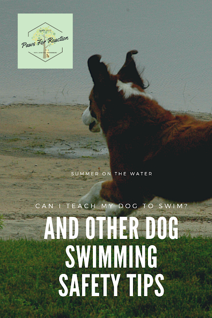 Can I teach my dog to swim? (and other dog swimming safety tips)