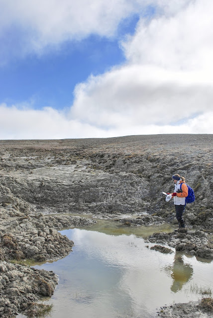 Ponds in High Arctic could be significant source of carbon emissions