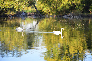 Участок «Камышеваха». Краматорский ландшафтный природный парк. Лебединое озеро