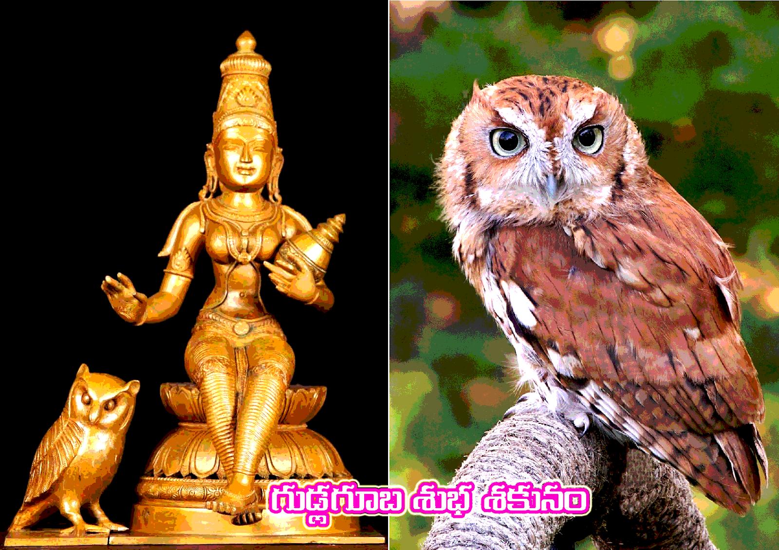 గుడ్లగూబ శుభ శకునం - Gudlaguba Shuba sakunam