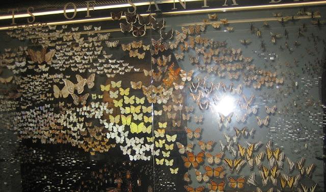 O que ver/fazer no Museu da História Natural em Santa Bárbara
