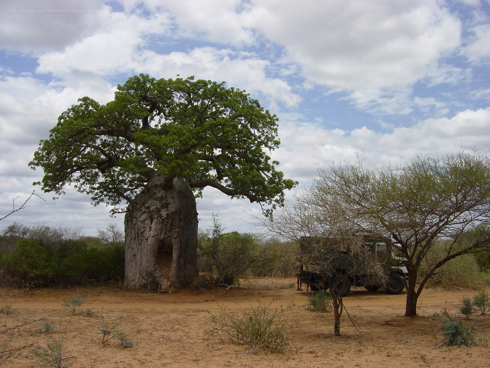 http://beautifulwallpapersfordesktop.blogspot.com/2014/01/travel-baobabs-wallpapers.html