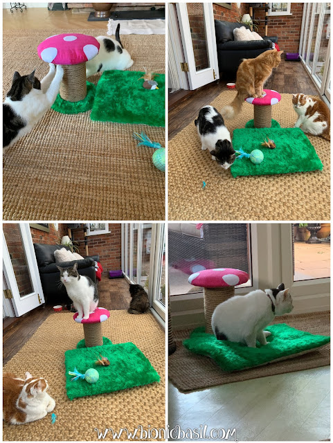 Crafting with Cats Easter Special ©BionicBasil® The Scratch'n'Purrch Magic Shroom with The B Team